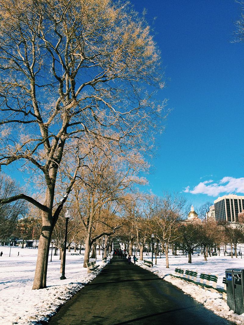 Boston Common | Sprig and Flours