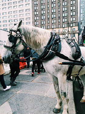 NYC March 2015 | Sprig and Flours