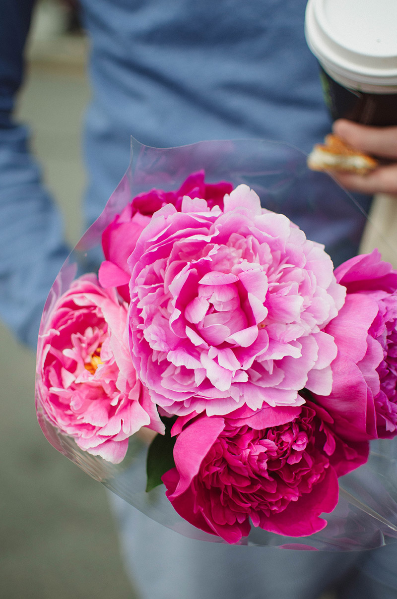 Peonies | Sprig and Flours